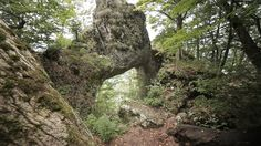 The Dragon's Gate. The Raven's Nest is the perfect starting point of your Transylvanian adventure. Continents, Mystic, Gate, Nest, Wildlife, Dragon, Europe, Adventure, Landscape