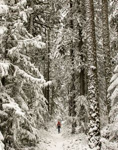 Trail following the Barlow Road in the Mt. Hood National Forest, Oregon.  Is it time to snowshoe yet?