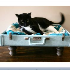 Suitcase bed for my kitty!!! He loves to be in y suitcases and purses!