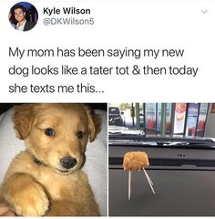 """21 Dog Memes To Remind You Just How Derpy Those Big Floofers Are - Funny memes that """"GET IT"""" and want you to too. Get the latest funniest memes and keep up what is going on in the meme-o-sphere. Funny Animal Memes, Cute Funny Animals, Cute Baby Animals, Funny Dogs, Funny Memes, Funniest Memes, Cute Dog Memes, Funny Quotes, Cute Puppies"""