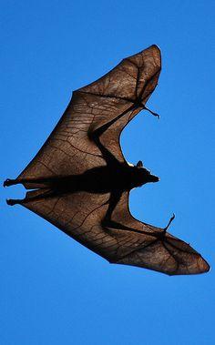 beautiful bat <3