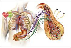 Os 5 Primeiros Sinais de Diabetes | Dicas de Saúde