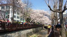 Seoul - Jinhae Gunhangje Cherry Blossom Festival Cherry Blossom, Seoul, Asia, Street View, Cherry Blossoms
