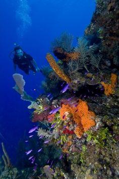 IMPROMPTU Yacht Charters - Dive Belize
