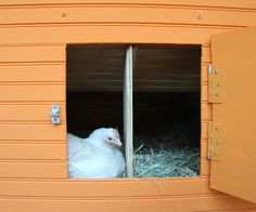 Photo: Misty Keasler/Redux Pictures | thisoldhouse.com | from 10 Ways to Build a Better Chicken Coop