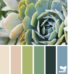 Another Succulent Color Scheme.
