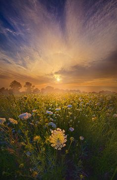 Echos The Sound Of Silence - Wisconsin Horizons By Phil Koch. Outdoor Photography, Amazing Photography, Landscape Photography, Nature Photography, Photography Ideas, Beautiful Sunrise, Life Is Beautiful, Beautiful Images, Flora Und Fauna