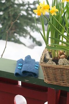 Vinterhagen: Strikking Plants, Plant, Planets