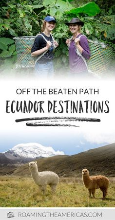 Ecuador is a country with a stunning and diverse landscape, but many people planning a trip there think only of the Galapagos Islands—with a stopover in Quito being a logistical afterthought. But there's far more to Ecuador than these famous islands—and even more to discover beyond the Amazon jungle or gorgeous beaches. Check out these 4 off-the-beaten-path places to visit in Ecuador! #ecuador #travel #southamerica #bucketlist #sustainable via @roamtheamericas