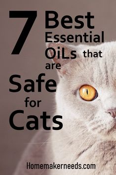 In general, some essential oils are harmful to them. The best way to keep our cat in perfect health is to only use essential oils that are good for cats. Calming Cat, Calming Oils, Calming Essential Oils, Are Essential Oils Safe, Essential Oils Cleaning, Essential Oil Candles, Essential Oil Blends, Essential Oils For Migraines, Cat Shampoo