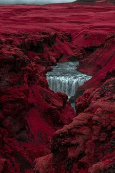 Al Mefer transforms rural Iceland into a rouge-tinted world, producing images that make the area's shrubbery look like candy floss, and moss-covered landscapes appear like red velvet cake. Magenta, Burgundy Color, Red Plum, Dark Red, Burgundy Flowers, Burgundy Hair, Deep Burgundy, Burgundy Aesthetic, Arte Obscura