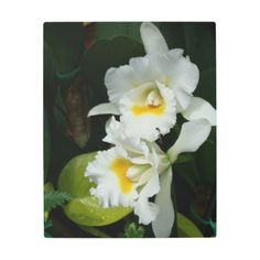 Elegant White Orchids Dark Green Metal Art Print  $107.24  by Claudine_Boerner  - cyo customize personalize unique diy