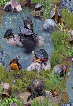 North American Wildlife Turtles in the Pond Cotton Fabric Land Turtles, Turtle Pond, Turtle Life, Funny Animals, Cute Animals, Aquatic Turtles, Turtle Quilt, Tortoise Turtle, Pond Life