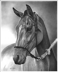 Beautiful example of a horse drawing for summer to see and learn from:)