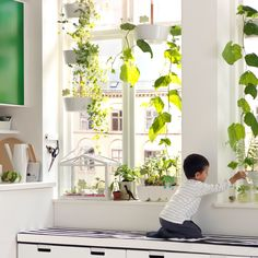 Grow a few plants indoors to create an instant connection with nature.