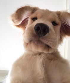 - Funny Selfies - Funny Selfies images - - The post Selfie! appeared first on Gag Dad. Cute Little Animals, Cute Funny Animals, Cute Dogs And Puppies, I Love Dogs, Doggies, Perros Golden Retriever, Golden Retrievers, Cute Creatures, Dog Friends