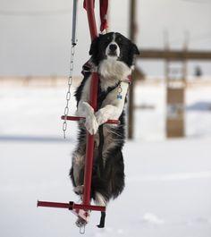 Ein entspannter Winterurlaub mit Skifahren, Langlaufen, Snowboarden, Wandern oder Rodeln mit Hund – ist das überhaupt möglich? Unser Fazit: Bei guter Vorbereitung und Planung für Sie, Ihre Familie und den Hund kann der Urlaub im Winter ein Riesenspaß für alle sein. Wir haben die wichtigsten P…