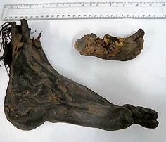The feets of bog bodies or probably of apothecary mummies? Found on a Dublin attic.