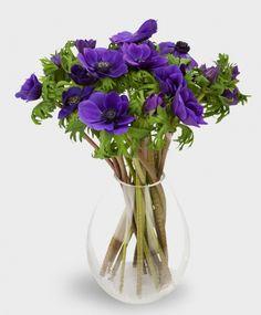 Анемон синий http://www.jollybunch.ru/flowers/anemon_10