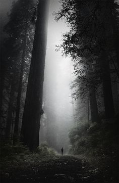 Passage | Path | Route | Entry & Exit | Moving | Travel | Forward | Redwood Forest, by ~Jamus via Flickr