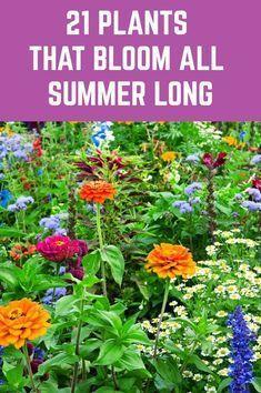 Garden Yard Ideas, Lawn And Garden, Garden Projects, Backyard Ideas, Outdoor Plants, Garden Plants, Outdoor Gardens, Garden Trees, House Plants