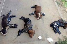 Cachorros são encontrados presos ao chão com pich: ift.tt/2aHz9UA