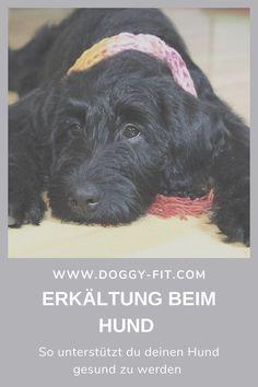 Erkältung beim Hund – ja, du hörst richtig. Auch Hunde können sich erkälten. Wir haben dir daher die typischen Anzeichen und mögliche Ursachen zusammengefasst. Zudem erfährst du, wie du deinen Hund unterstützt wieder gesund zu werden!Erkältung beim Hund | Hundekrankheiten | Hundegesundheit | Schnupfen Hund | Hundemantel | Immunsystem Hund | Symptome Erkältung Hund | Hundewissen