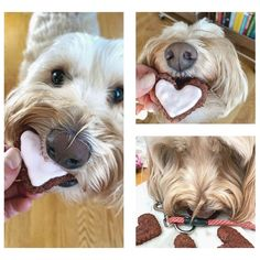 Collage featuring dog eating bet cookies Love Beets, Fresh Beets, Natural Food Coloring, Pink Food Coloring, Valentine Status, Sour Cream Icing, Vegetable Prints, Types Of Flour, Creamed Honey