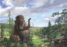 Woolly Mammoth in Europe by Atelier Bunterhund