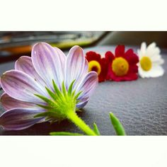 #Flower #Flor #Murcia #España #Cute #Love #Photo #fotografia  #Wood #Colour #Pink #Red #white  #green #Primavera #Spring