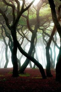 Shrouded, The Enchanted Wood It looks like tree people, dancing Beautiful World, Beautiful Places, Beautiful Forest, Foto Nature, Cool Pictures, Beautiful Pictures, Nature Pictures, Enchanted Wood, Tree Forest