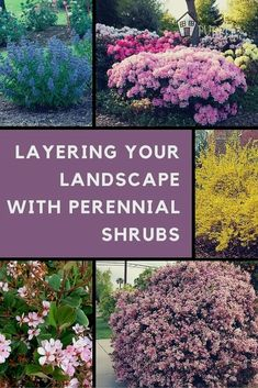Garden landscaping ideas on a budget landscapinggarden people also love these ideas mightylinksfo