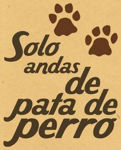 #funny, de pata de perro