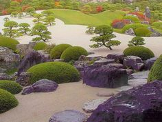 japanese shrubs - Google Search