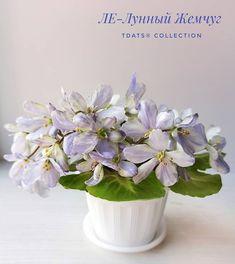 LE-Lunnyi Zhemchug / ЛЕ-Лунный Жемчуг • E. Lebetskaya • Miniature, 2020, Ukraine • Single white bell, blue streaks. Medium green, scalloped, girl foliage. Miniature #LELunnyiZhemchug #LebetskayaViolets #Miniviolet #MiniatureViolet #MicroMiniViolet #MiniViolets_Lux #GirlLeaves #GirlFoliage #AVSA #AfricanVioletSocietyOfAmerica #AfricanViolet #IndoorPlant #Houseplant #saintpaulia #AfricanVioletLovers #fialka #saintpaulia #senpolia #flowers #blooms #fialki #flowerpower