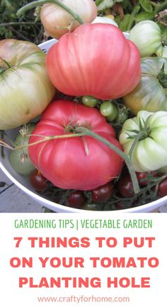 There are many benefits to using raised vegetable garden beds in your garden. For starters, elevated garden beds are easier on your back and knees because they require less bending, kneeling and crawling than . Growing Tomato Plants, Growing Tomatoes In Containers, Growing Vegetables, Grow Tomatoes, How To Plant Tomatoes, Potted Tomato Plants, Baby Tomatoes, Backyard Vegetable Gardens, Container Gardening Vegetables