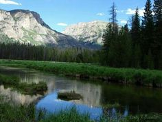 Meadow by Adam's Falls ~ Rocky Mountain National Park by Cindy J. Buechler