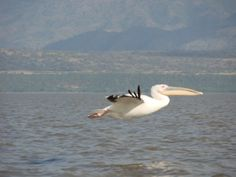 Discover the highlights of Italy's Amalfi coast on foot Day Room, Late Evening, Storks, Bird Species, Amalfi Coast, Ethiopia, Fresh Water, Scenery, Places To Visit