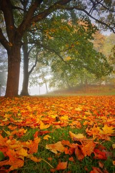 The colors of fall by Stefan Schnöpf