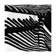 Zebras on the Wall by Christiana Hudson for Minted
