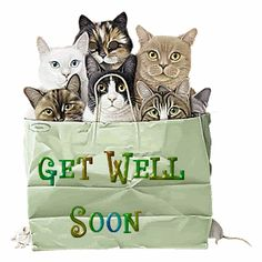 kitty get well gif - Bing images Get Well Prayers, Get Well Soon Messages, Get Well Soon Quotes, Get Well Wishes, Get Well Cards, Get Well Soon Cat, Cat Cards, Feeling Sick, Cat Memes