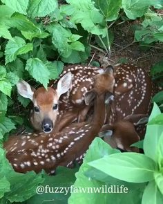 so beautiful 315392780152729036 Baby Animals Cute Creatures, Beautiful Creatures, Animals Beautiful, Beautiful Beautiful, Cute Funny Animals, Cute Baby Animals, Cute Dogs, Cute Babies, Nature Animals