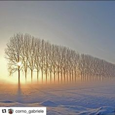 #Repost @corno_gabriele with @repostapp  The never ending story #awesome #amazing #cool #colors #magic #majestic  #lit #light #love #life #Hope #Harmony #Horizons #Idyll #Imagine #Inspired #Incredible #Follow #PhotOfTheDay #Wonderland #Fairytale #winter #sunrise #trees #snow #frozen #enchanted #mesmerizing