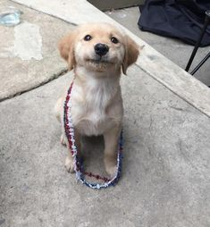 Astonishing Everything You Ever Wanted to Know about Golden Retrievers Ideas. Glorious Everything You Ever Wanted to Know about Golden Retrievers Ideas. Cute Puppies, Cute Dogs, Dogs And Puppies, Doggies, Cute Funny Animals, Funny Animal Pictures, Animal Pics, Perros Golden Retriever, Retriever Puppies