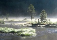 Morning mist on the Stillwater Fork of the Bear River, near Christmas Meadows, Utah.