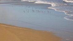 minha praia, meu quintal... litoral norte do rio grande do sul, brasil... o balé na areia...
