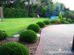 Borówcowy raj - strona 34 - Forum ogrodnicze - Ogrodowisko