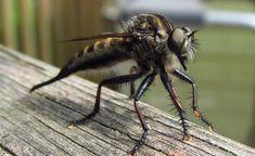 Toto daj do okna a už v živote ti do domu nevletí komár či mucha!
