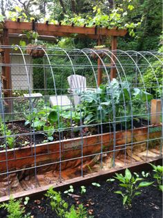 Bend a cattle panel between two raised beds to make an arching trellis. Great…