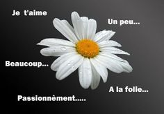 """When plucking flower petals, the French have a saying:  """"je t'aime un peu"""" (a little), """"beaucoup"""" ( a lot), """"passionnèment"""" (passionately), """"à la folie"""" (to madness), """"pas du tout"""" (not at all).  I have always thought you stood a much better chance of being loved in French than in English with the """"He loves me, he loves me not."""""""